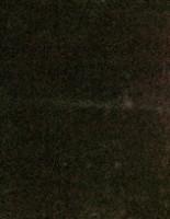 Бордово-бронзовый хамелеон