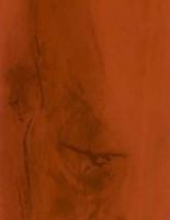 Красная ольха